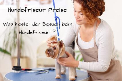 Hundefriseur Preise